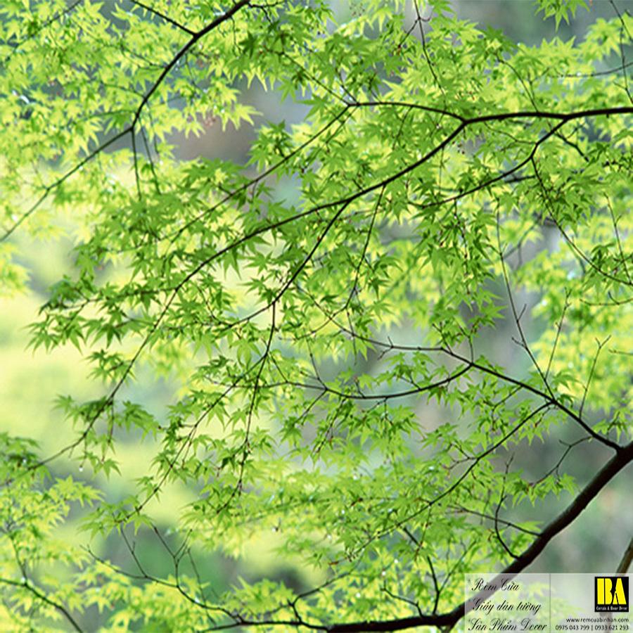 Tranh dán tường hình thiên nhiên cây xanh   Tranh dán tường in mực dầu hình phong cảnh Bình An