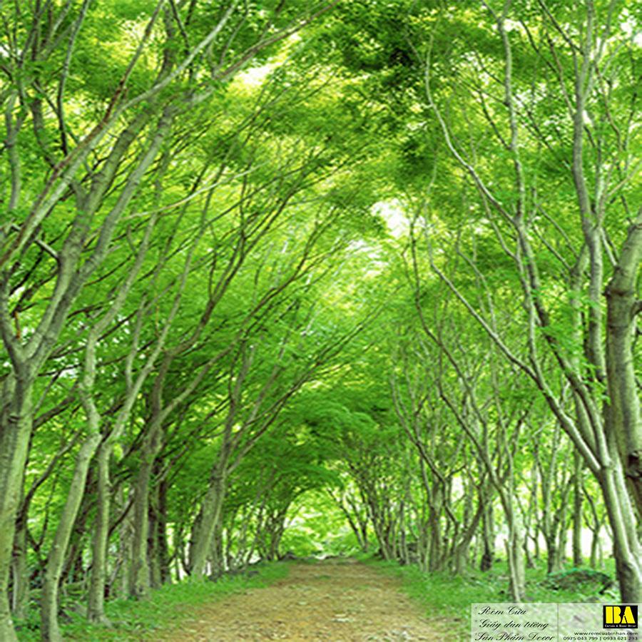 Tranh dán tường rừng cây   Tranh dán tường in mực dầu hình phong cảnh Bình An